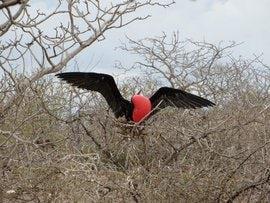 Galapagos bird.jpg