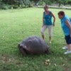 Galapagos turtle ladies.jpg