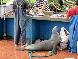 galapagos fish market seal.jpg