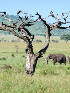 Tanzania: The Serengeti & Beyond with Globus
