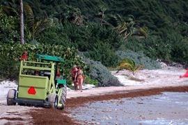 Seaweed removal.jpg