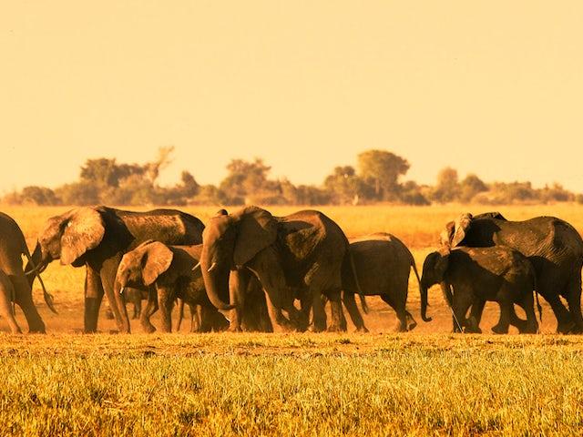 banner-elephants.jpg