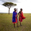 ELEPHANT PEPPER CAMP- MASAI MARA- KENYA