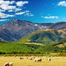 New Escorted Tour: New Zealand Agri Tour