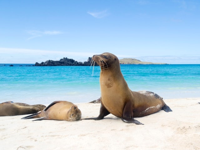 Galapagos Province