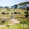 Gay Safari: Tanzania and Zanzibar Extension