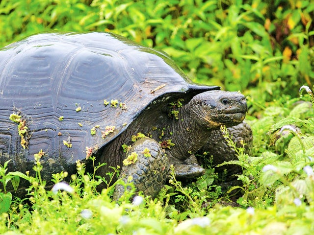 7-Night Galapagos Inner Loop