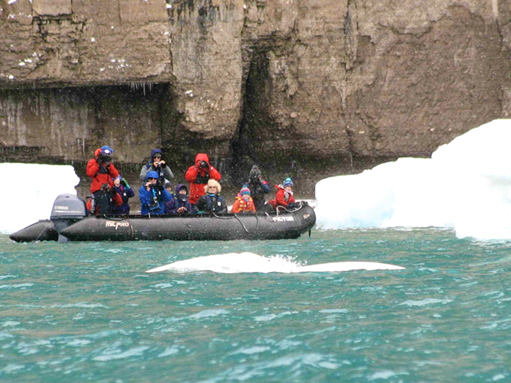 f065b0e3b704 Canada s Northwest Passage  An Epic Arctic Journey with Adventure Canada