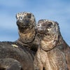 Galapagos Cruises- Aboard the 'CATAMARAN PETREL'
