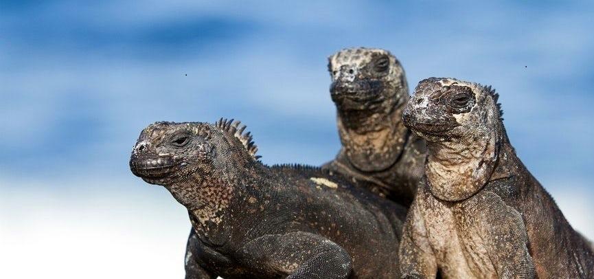 Galapagos Cruises- Aboard the 'CATAMARAN PETREL'