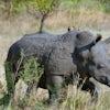 African Safari: Kenya 13 & 19 Days, 2019