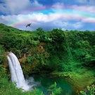 Hawaiian Adventure