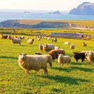Countryside of the Emerald Isle