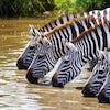 Tanzania 2 FREE NIGHTS ON US : Ngorongoro Crater and Serengeti: (9 Day / 8 Night)