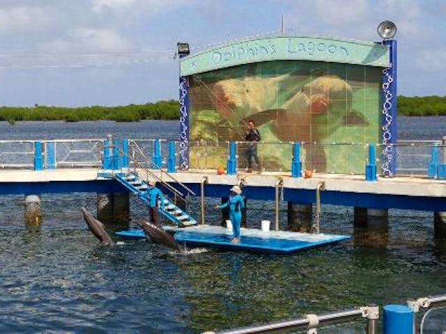 Dolphinarium Cayo Santa Maria