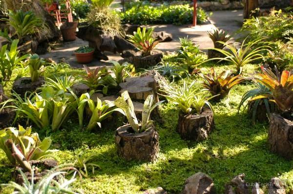 Botanical Garden Cienfuegos