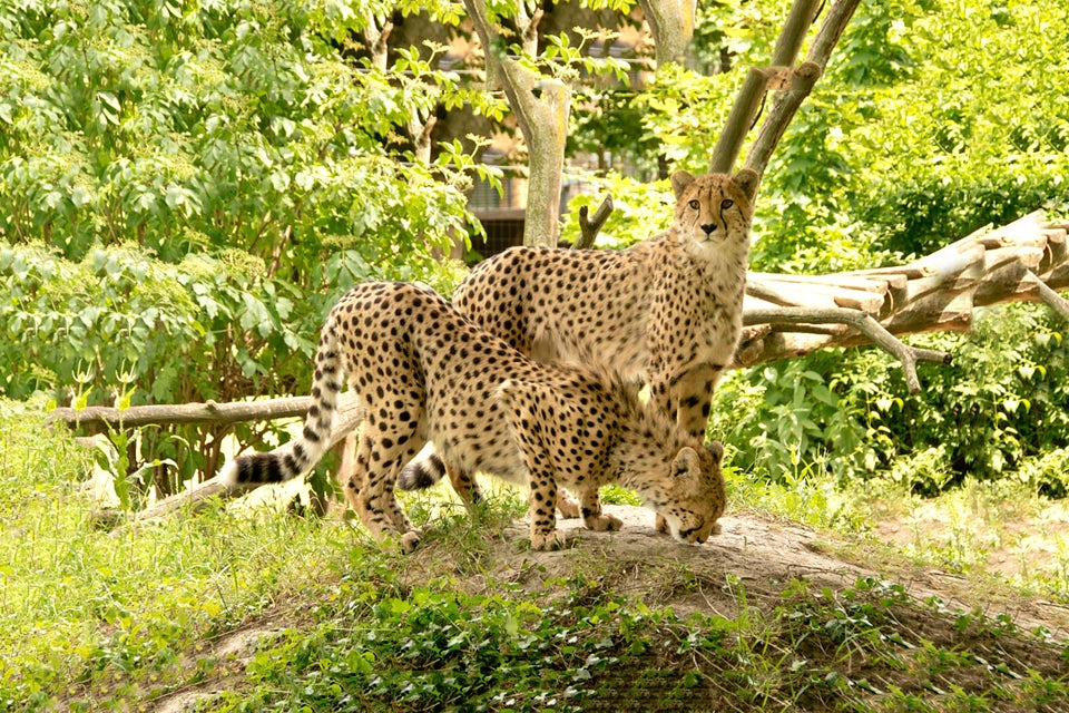 africa-nature 1.jpg