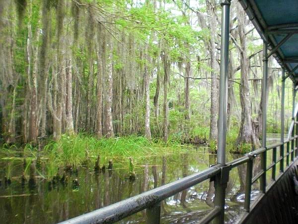 Louisiana Bayou