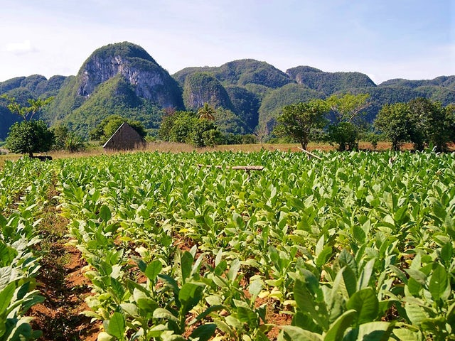 Trip to Vinales Valley