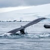 Fascinating Antarctica...Ponant can take you there!