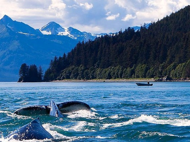 7 Day Vegan Alaskan Hubbard Glacier Cruise