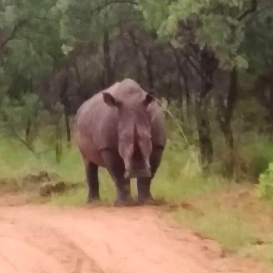 Incredible Trip to South Africa