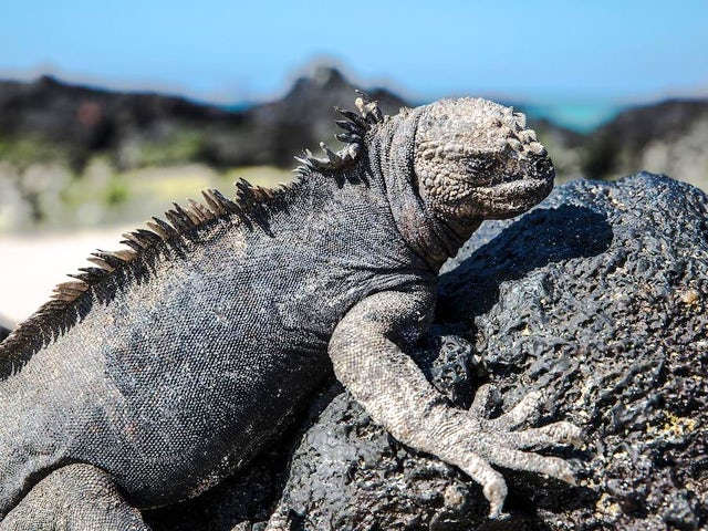 Galápagos North & Central Islands 7-Day Cruise