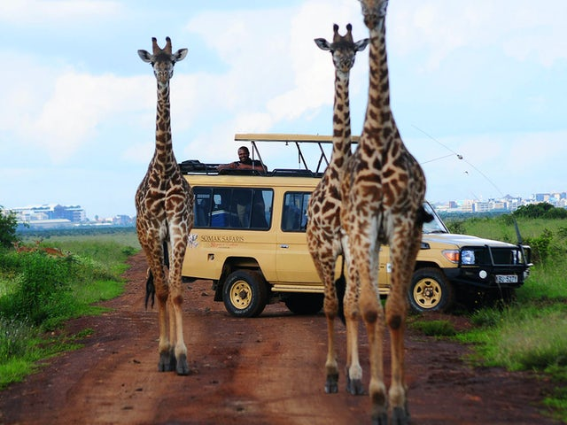 Trafalgar - Save on trips to Africa in 2019!