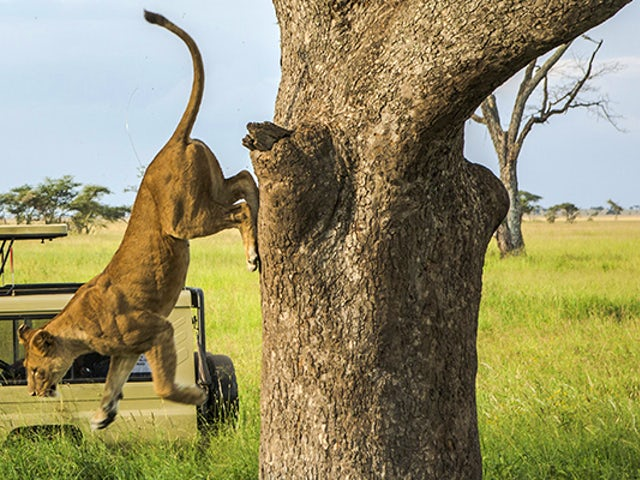 Save 15% on Classic G Adventures Africa trips
