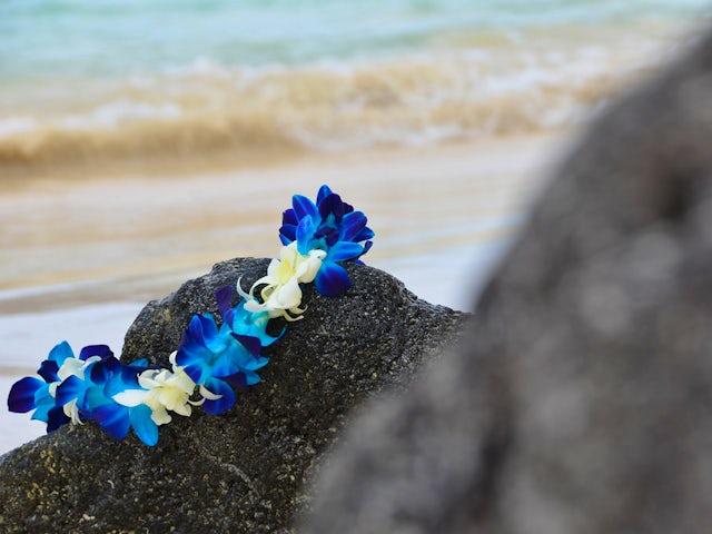 Aloha Hawaii Land & Sea Adventure