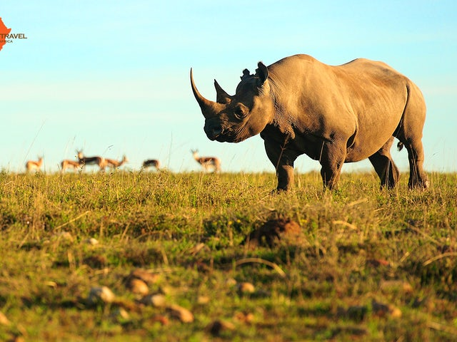 African Travel, Inc. - South Africa's Natural Wonders!