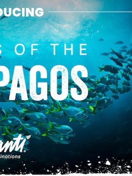 Introducing the Galápagos Islands with Avanti Destinations
