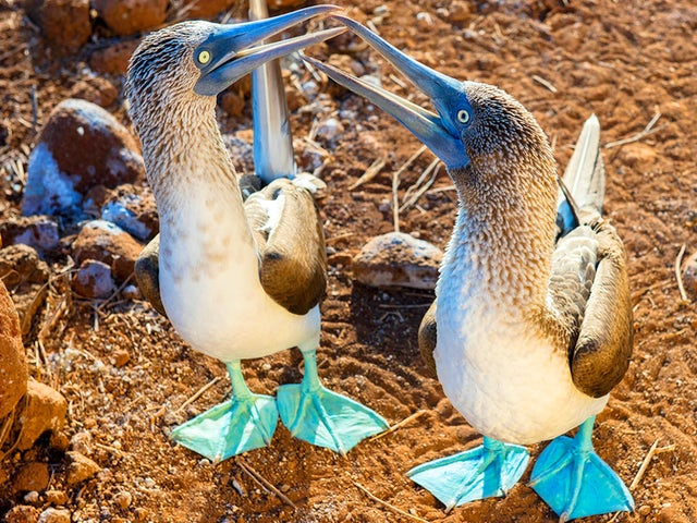 Goway Travel - Set Sail in the Galapagos and save!