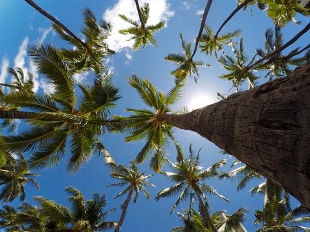 Learn Some Key Hawaiian Phrases.