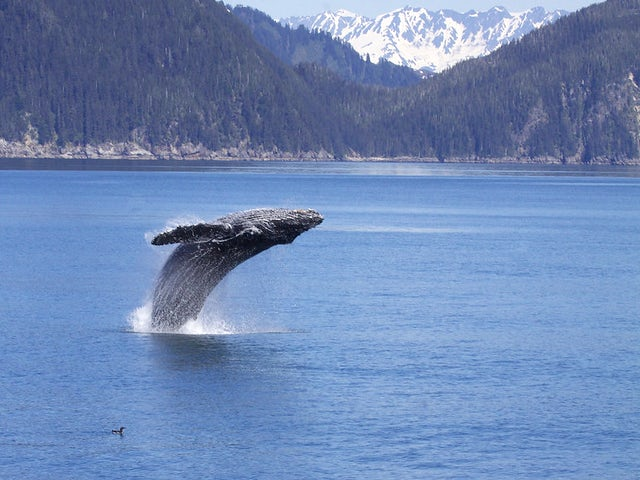 Glacial Alaska Cruise Tour