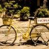 calabria yellow bike.jpg