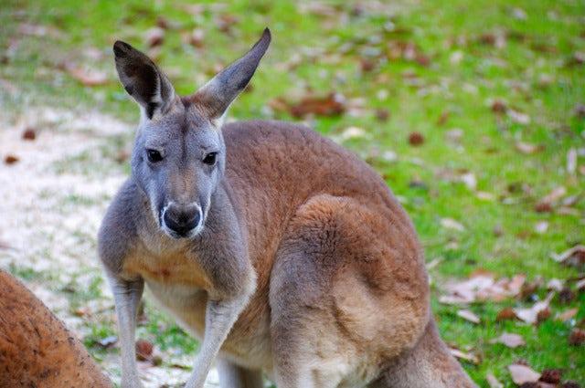 Best Time To Go To Kangaroo Island