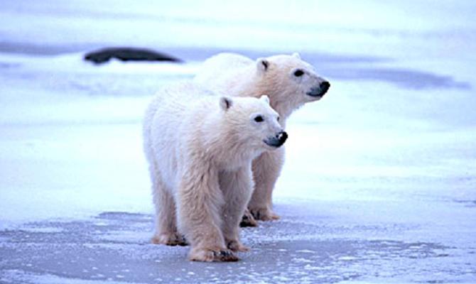 Antarctica / Alaska