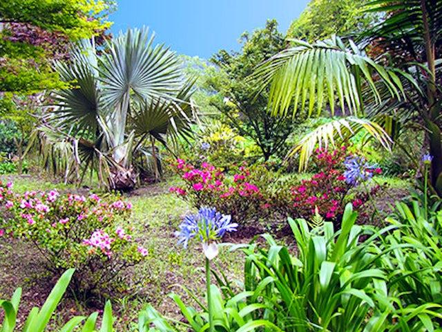 Portugal's Gardens