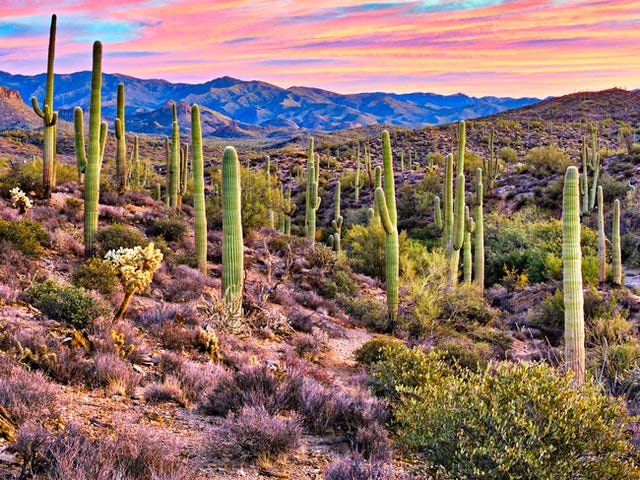 Mexicos Great Copper Canyon including Phoenix Accommodation Summer 2018
