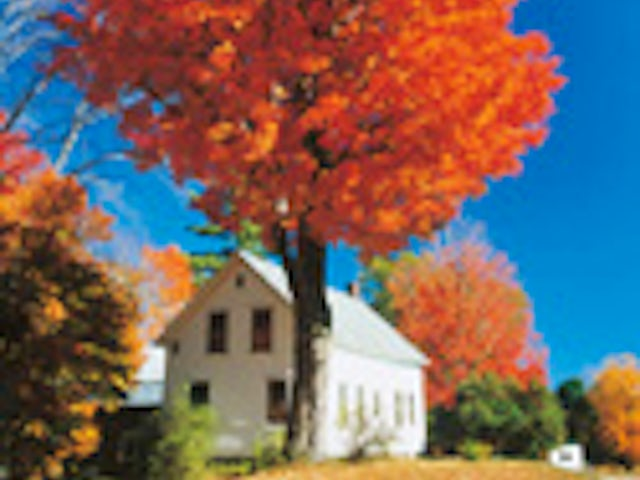 New England's Fall Foliage (Summer 2019)