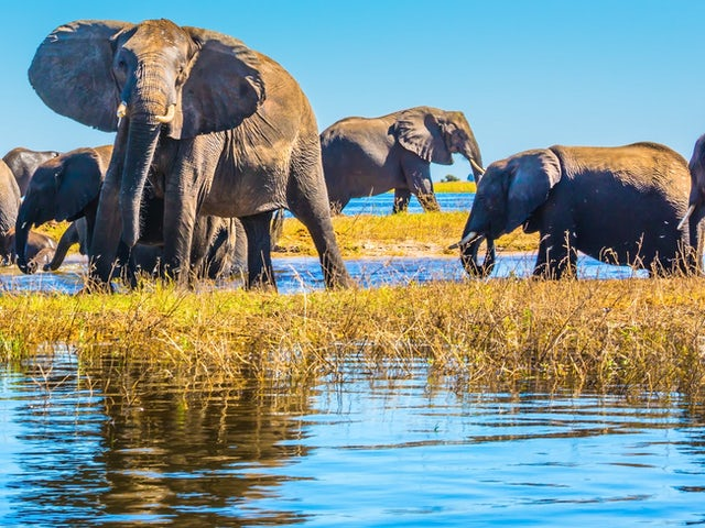 Botswana Delta Experience Summer 2019