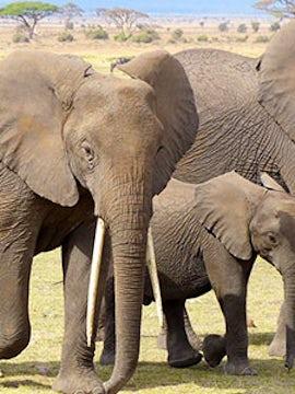 Kenya: A Classic Safari with Nairobi & Stay in Maasai Mara
