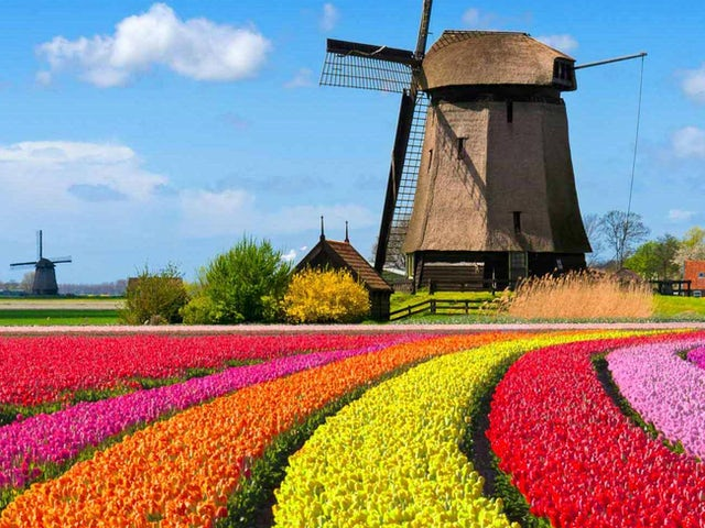 Best of Holland Summer 2019