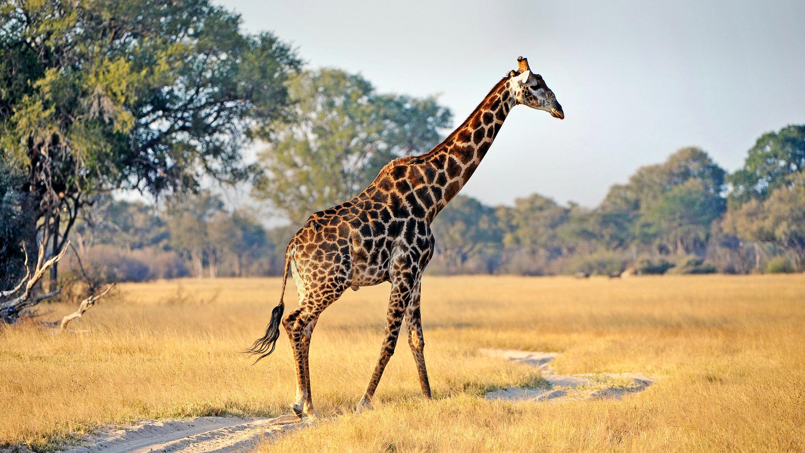 Kruger, Falls & Zimbabwe