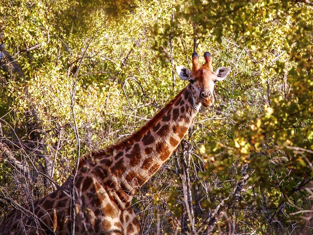 Cape to Kruger Adventure