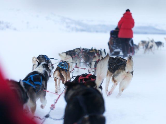 Lapland Active Adventure