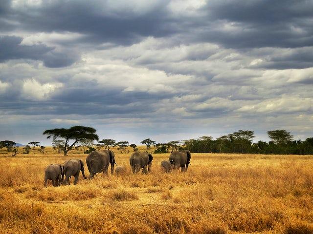 Masai & Tanzania Camping Safari