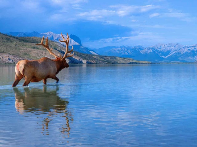 Panoramic Canadian Rockies with Alaska Cruise Oceanview Cabin Summer 2019