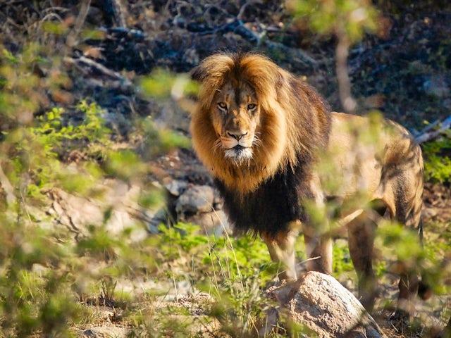 TailorMade: Cape Town, Kruger & Zimbabwe
